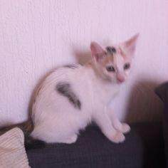 Sieh dir meinen Beitrag Auf ins Katzenleben beim Wettbewerb FRESSNAPF Moments-Gewinnspiel an und stimme gleich für mich ab!