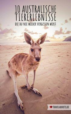 10 Tierische Erlebnisse in Australien die du nie wieder vergessen wirst