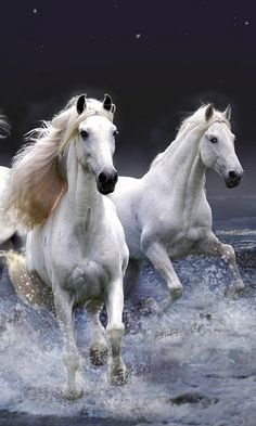 ^On a run #horses #white