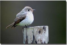 Tiny Bird, Hummingbirds, Asian, Brown, Nature, Animals, Exotic Birds, Naturaleza, Animales