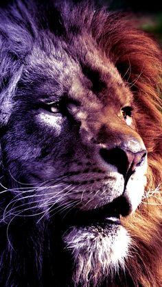 Lion Leo Art