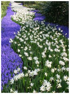 River of Flowers, Lisse, Netherlands http://www.trekearth.com/gallery/Europe/Netherlands/South/Zuid_Holland/Lisse/photo346977.htm