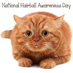 Are you one of the 35% of cat-owning households that consider hairballs a serious problem for their cats? If you are, we'll be happy to educate you on the importance of proper grooming and digestive health, in honor of National Hairball Awareness Day this Saturday.