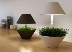 'lightpot' By Designers kfir schwalb and orit magia of studio shulab. A small pot for growing plants and herbs indoors. it works with the use of LED lighting. 'lightpot' can be placed anywhere in the house and in any light condition. Small Plants, Potted Plants, Indoor Plants, Growing Plants Indoors, Herbs Indoors, Deco Studio, Led Fixtures, Self Watering Planter, Modern Planters