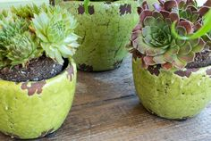 #diygardeneas Opt for Low-Care Succulents If your green thumb is a little, um, brown, a low-maintenance plant, like echeveria shown here, is a safe bet. Thanks to their ability to store water in their fleshy leaves, stems and roots, succulents require very little watering — but they do require plenty of sun. Position the pots where they will receive at least 2-4 hours of direct sunlight each day and water sparingly only when the topsoil is completely dry, about every 10 days. #Gardening…