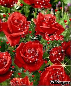 A Creative Community for Fans, Photos and Fun Rose Flower Wallpaper, Flowers Gif, Flowers Nature, Exotic Flowers, Pretty Flowers, Beautiful Flower Drawings, Beautiful Love Pictures, Beautiful Red Roses, Beautiful Gif
