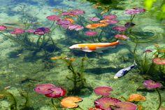 池に隣接する「フラワーパーク板取」では、たくさんの花の苗をリーズナブルに購入することができます。ちなみにこのフラワーパークのご主人が、名前のない池に睡蓮を植えた方だそうです。