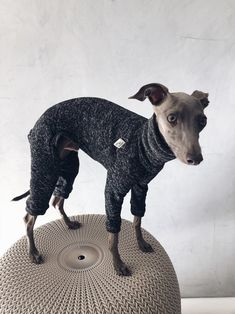 italian greyhound and whippet clothes / iggy clothes / Dog Sweater / ropa para galgo italiano y whippet/ BLACK JUMPSUIT Underwear, Italian Greyhound, Whippet, Black Jumpsuit, Boston Terrier, Warm, Etsy, This Or That Questions, Dogs