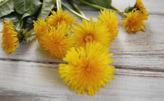 Don't get angry at the dandelions in your yard! Dandelions are more than just weeds! Dandelions are quite beneficial and here are ways to use dandelion! Dandelion Oil, Dandelion Benefits, Natural Blush, Natural Face, Going Natural, Natural Makeup, Natural Wood Cleaner, Homemade Shampoo, Homemade Conditioner
