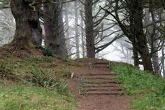 Hobbit trail mile roundtrip) leads through middle earth-like forest to a hidden beach - between Florence & Yachats, off Hwy Oregon Oregon Coast Hikes, Southern Oregon Coast, Oregon Beaches, Oregon Road Trip, Oregon Trail, Oregon Camping, Oregon Lakes, Oregon Hiking, Rv Camping