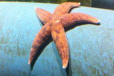 29 Blue Reef Aquarium