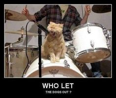The best banding ever.hahahah - your daily dose of funny cats - cute kittens - pet memes - pets in clothes - kitty breeds - sweet animal pictures - perfect photos for cat moms Cute Kittens, Cats And Kittens, Funny Kitties, Crazy Cat Lady, Crazy Cats, Cool Cats, Animal Pictures, Funny Pictures, Funny Images