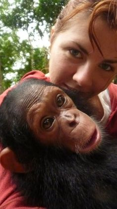 Baby Milou. Orphaned Chimpanzee from Sanaga Yong Chimp Rescue Centre, Cameroon