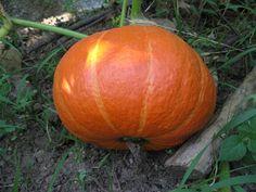 ΟΙΚΟΓΕΝΕΙΑ ΟΡΘΟΔΟΞΩΝ ΧΡΙΣΤΙΑΝΩΝ : ΣΠΟΡΟΙ ΑΠΟ ΠΑΛΙΕΣ ΠΑΡΑΔΟΣΙΑΚΕΣ ΠΟΙΚΙΛΙΕΣ ΛΑΧΑΝΙΚΩΝ !! (1) Pumpkin, Vegetables, Blog, Pumpkins, Vegetable Recipes, Blogging, Squash, Veggies