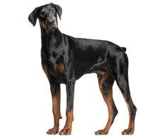 Dog Splint No Knuckling Uk