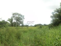 200 Acre farm in Belize for sale! Price recently reduced! #Belizefarms #farmsforsale