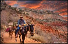 mule rides grand canyon | mule riding 20081125 a mule ride down that grand canyon s bright angel ...