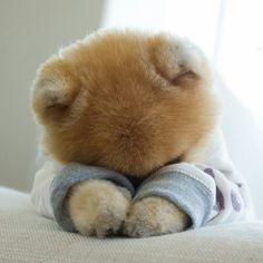 Cute Fluffy Puppies, Super Cute Puppies, Cute Baby Dogs, Cute Funny Dogs, Super Cute Animals, Cute Cats And Dogs, Cute Dogs And Puppies, Cute Little Animals, Cute Funny Animals