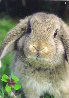Beautiful Bunny Rabbit