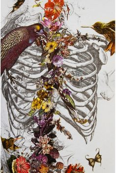 Skull-less Skeleton. An interesting drawing celebrating life, death, and beauty. Anyone know the author? Art And Illustration, Illustrations, Kunst Inspo, Art Inspo, Street Art, Skeleton Art, Skeleton Bones, Skeleton Flower, Photocollage