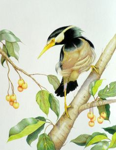 Colored Pencil Society of America DC 201 | Members' Art Gallery | Dee Wagoner