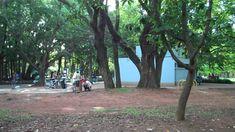 Uma tarde no parque do Ibirapuera (Flip Ultra HD)