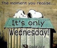 Images of Only Wednesday Wednesday Greetings, Wednesday Memes, Happy Wednesday Quotes, Good Morning Wednesday, Good Morning Good Night, Wacky Wednesday, Wednesday Motivation, Happy Tuesday, Sunday