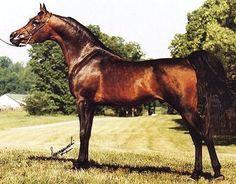 IMPERIAL SATURN  (*Ibn Safinaz x Imperial Mistilll, by *Jamilll) 1991 bay stallion