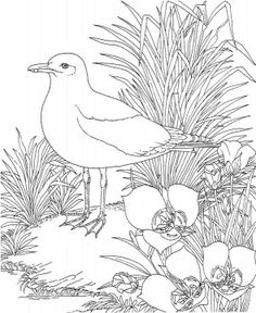 Free Printable Coloring PageUtah State Bird And Flower Seagull Sego Lily Educational Printables