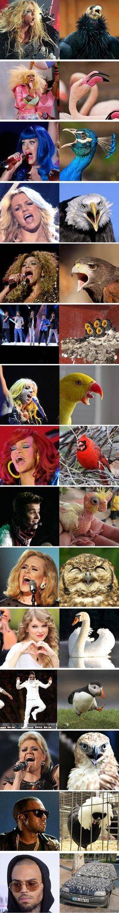 If famous singers were birds. - Imgur