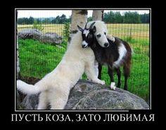 Новые прикольные демотиваторы дня! / Приколы