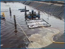 Biofloc Culture. Also, visit this link for Texas A&M Biofloc: http://fisheries.tamu.edu/files/2013/09/SRAC-Publication-No.-4503-Biofloc-Production-Systems-for-Aquaculture.pdf