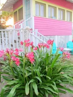 Pink Tropical Bedroom: Jane Coslick Cottages : Luscious Little Cottage Pi. Cozy Cottage, Coastal Cottage, Coastal Homes, Cottage Homes, Beach Cottage Exterior, Coastal Living, Beach Cottage Style, Beach House Decor, Coastal Style