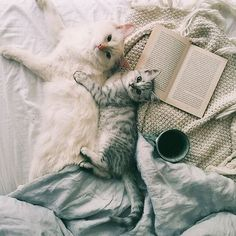 Find images and videos about cute, cat and animal on We Heart It - the app to get lost in what you love. I Love Cats, Cute Cats, Funny Cats, Crazy Cat Lady, Crazy Cats, Lila Baby, Foto Blog, Cats And Kittens, Fur Babies