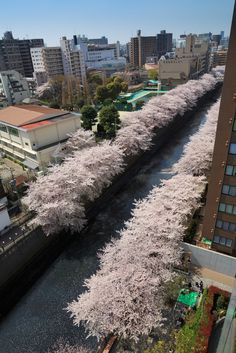 View of Meguro River
