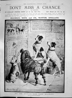 All Dogs, More Fun, Terrier, Ads, History, Dog Stuff, Classic, Prints, Illustrations
