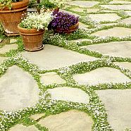 65 Low-maintenance landscaping ideas for the small front yard – Garden Landscaping ideas - How to Make Gardening Low Maintenance Landscaping, Low Maintenance Garden, Small Front Yard Landscaping, Backyard Landscaping, Stone Landscaping, Backyard Plants, Country Landscaping, Simple Landscaping Ideas, Backyard Ideas