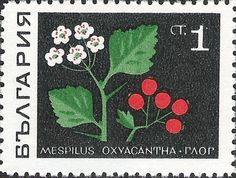 Buy and sell stamps from Bulgaria. Meet other stamp collectors interested in Bulgaria stamps. Flower Crafts, Flower Art, Floral Illustrations, Illustration Art, Sell Stamps, Craft Stamps, Stamp Catalogue, Postage Stamp Art, Flower Stamp