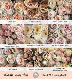Mayesh Cooler Picks - Spring - Taupey Blush // Products: top: Ghobi rose, Cappuccino rose, Juliet Garden Rose | middle: Moonstone Garden Rose, Patience Garden Rose, Mother of Pearl rose | bottom: Emely rose, Sahara spray rose, Citrine Gem spray rose