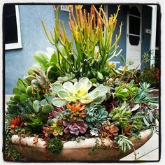 Succulent fountain by Manuel Vega Velazquez