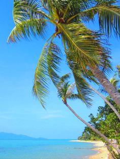 Tropical surrounding on Samui, Maenam Beach, Fair House Villas & Spa