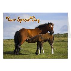Pony Mare Feeding Foal birthday card - click/tap to personalize and buy