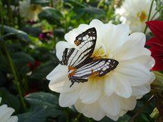 Aren't butterflies amazing?