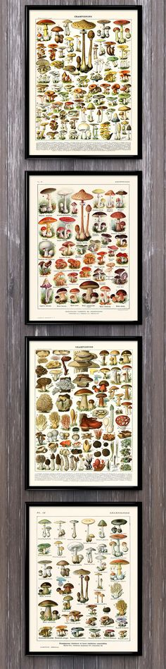 The complete set of spectacular renderings of mushrooms, champignons, funghi, and more in one value-priced set. Save!