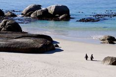 Boulders Beach South Africa: I swam with penguins - someday I'm going back with my boys. Boulder Beach, Cape Town, Day Trip, Bouldering, South Africa, Beaches, Places To Go, Surfing, Beautiful Places