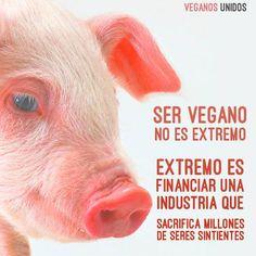 Cocina – Recetas y Consejos Vegetarian Quotes, Vegan Quotes, Going Vegetarian, Going Vegan, Vegan Vegetarian, Vegan Food, Animals And Pets, Cute Animals, News Memes