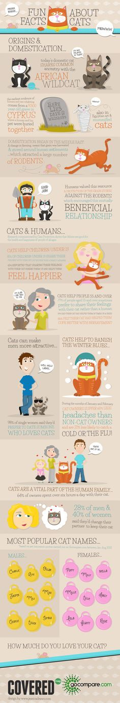 Fun Facts About Cats Infographic #facts - More info about cat at Catsincare.com!
