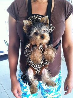 I want a Yorkie just like this!