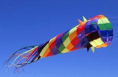spiney kite