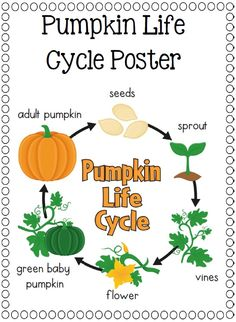 pumpkins on pinterest : pumpkin diagram - findchart.co